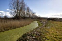 绿藻类盖的小河 库存图片