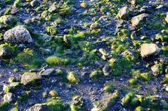 绿藻类 库存图片