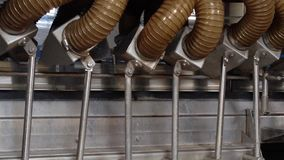 绿豆的生产的运作的过程在罐头工厂的 洗涤在水中的成熟绿豆在保存前 影视素材