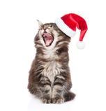 缅因与开放嘴的树狸猫在红色圣诞老人帽子 查出在白色 库存照片