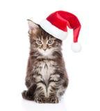 缅因在看照相机的红色圣诞老人帽子的树狸猫 查出在白色 库存图片