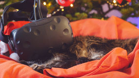 缅因树狸猫戴虚拟现实眼镜坐枕头在一棵美丽的新年装饰的树 库存照片