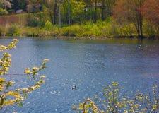 缅因河岸在一明亮的天在5月,平静的平静安静 库存图片