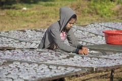 缅甸女孩在渔村放置乌贼干燥 酸值phangan泰国 免版税图库摄影