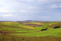 缅甸缅甸ricefield 库存图片