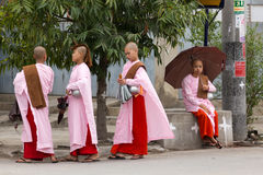 缅甸年轻尼姑 库存图片