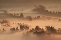 缅甸& x28的有薄雾的森林; Burma& x29; 库存照片