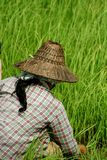 缅甸 免版税库存图片