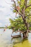 缅甸8月26日, 2014年:缅甸孩子跳 免版税库存图片