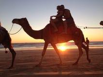 缆绳海滩骆驼 库存图片