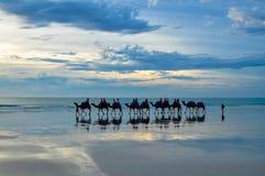 缆绳海滩骆驼 库存照片