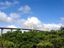 缆绳被停留的桥梁和树 免版税库存照片