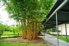 缓慢地佛罗里达植物庭院 库存图片