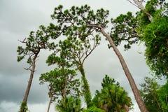 缓慢地佛罗里达植物庭院 免版税库存图片