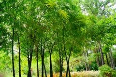 缓慢地佛罗里达植物庭院 免版税库存照片
