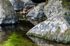 编组在水池的灰色石头与生长在他们的青苔 免版税库存照片