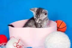编织的小猫和线程数 免版税库存照片