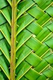 编织的椰子离开纹理 库存照片