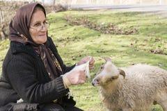 编织羊毛袜子的一名回教妇女的画象,当她关心s 库存照片