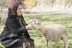 编织羊毛袜子的年长回教妇女,当她关心绵羊 免版税库存照片