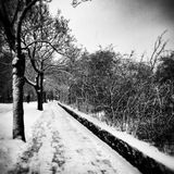 编译的古典列停放peterhof彼得斯堡俄国st冬天 在黑白的艺术性的神色 免版税库存照片