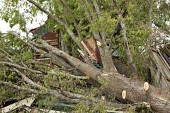 编译的损坏的龙卷风结构树 免版税库存照片