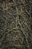 缠绕的不生叶的爬行分支 免版税库存图片