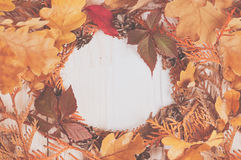缠绕从金钟柏的干燥分支的框架小插图 图库摄影