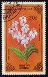 缬草属officinalis开花的花从花系列的,大约1986年 免版税库存图片
