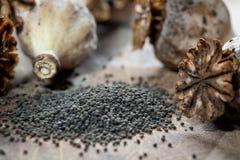 罂粟种子和seedpods 图库摄影