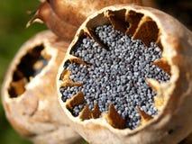 罂粟种子 免版税库存照片
