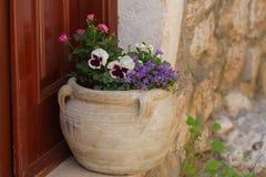 罐康乃馨、紫罗兰和会开蓝色钟形花的草 图库摄影