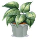 罐的一棵植物 库存例证