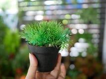 罐的小塑料植物在有美好的bokeh backgr的手指 免版税库存图片