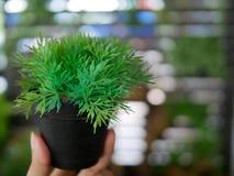 罐的小塑料植物在有美好的bokeh backgr的手指 免版税库存照片