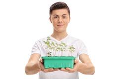给罐的少年一棵植物 库存照片