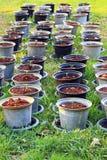 罐的年幼植物 免版税库存图片