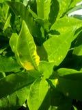 罐的新鲜的植物 免版税库存照片