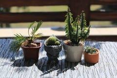 罐的最小的仙人掌植物 免版税库存照片