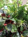 罐的植物 免版税库存图片