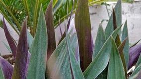 罐的植物 免版税库存照片