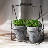 罐的植物 免版税图库摄影