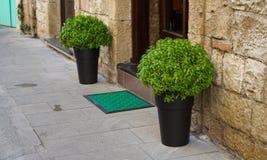 罐的植物 图库摄影