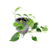 罐的议院植物 免版税图库摄影