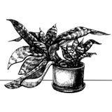 罐的议院植物 免版税库存照片