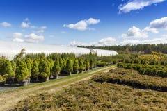 罐的针叶树植物在室外苗圃场 免版税库存图片