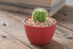 罐的仙人掌植物 免版税库存照片