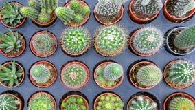罐的仙人掌植物 库存照片