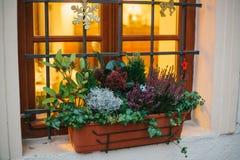罐美丽的植物房子窗口外,装饰用圣诞节属性-雪花、星和鹿 图库摄影