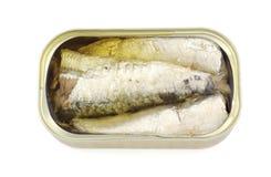 罐装沙丁鱼 免版税库存图片
